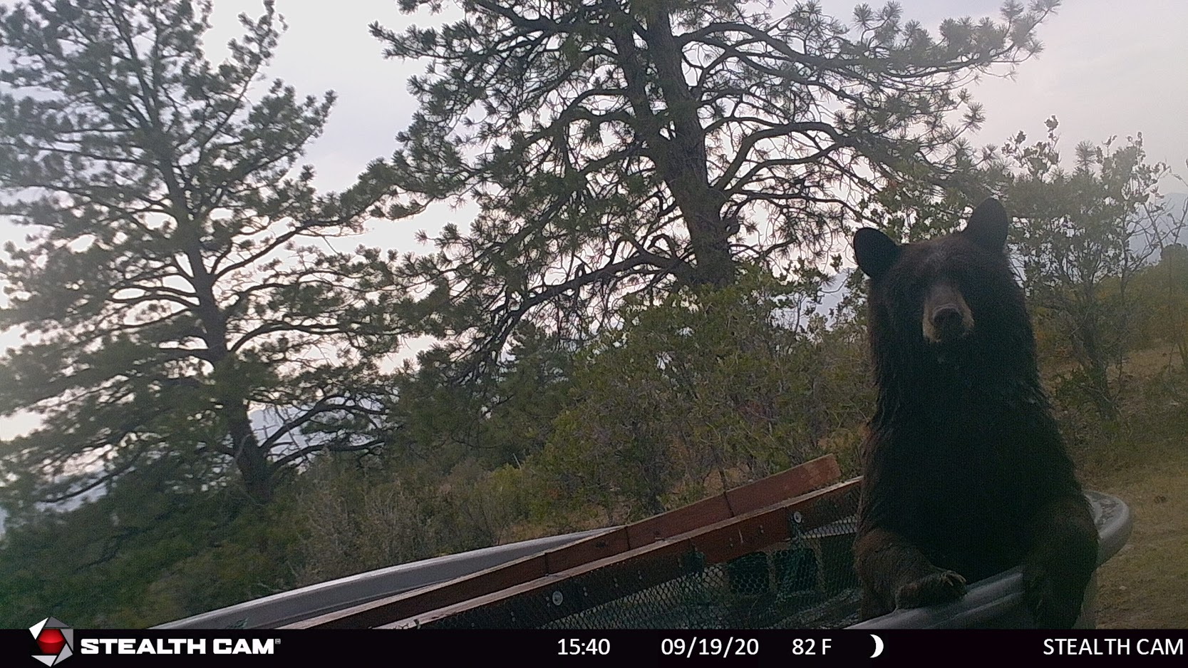 big bear in water tank