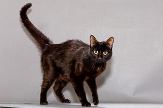 Winifred, Cat