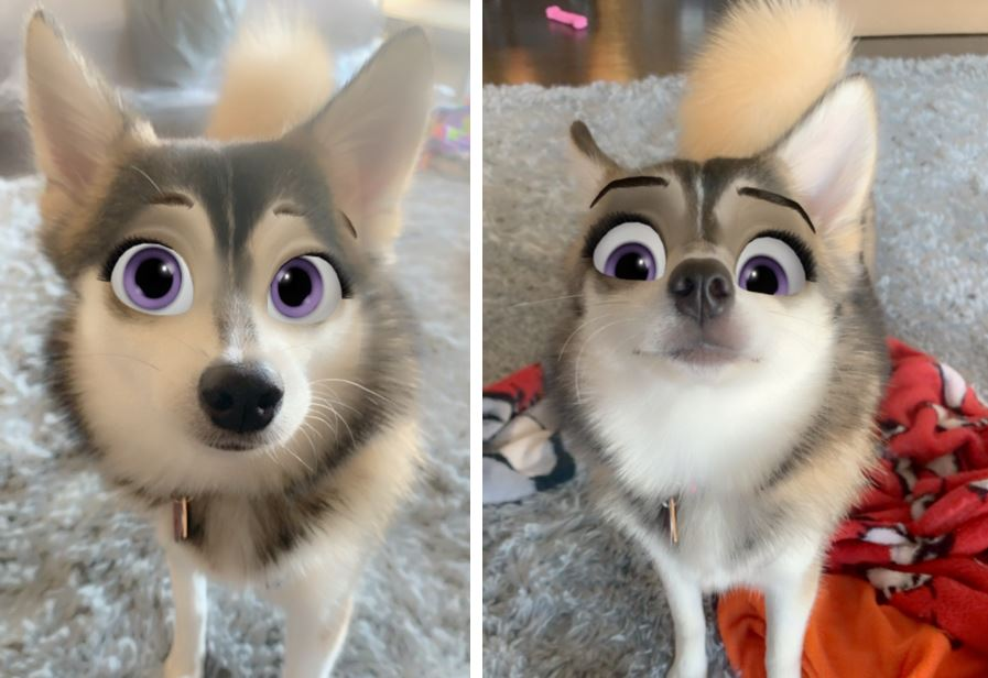 New Snapchat Filter Turns Your Dog Into A Disney Cartoon