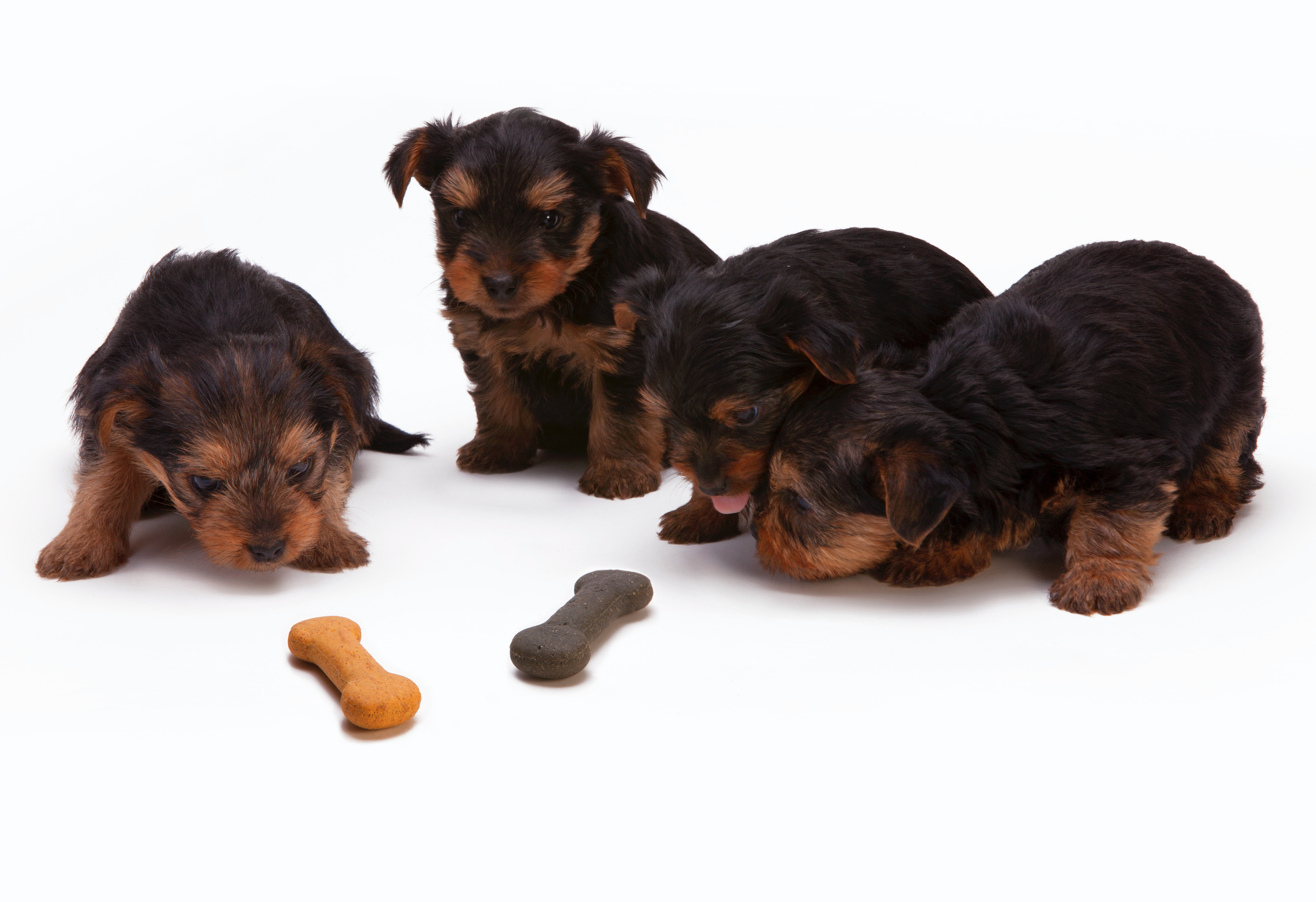 puppies and a dog biscuit