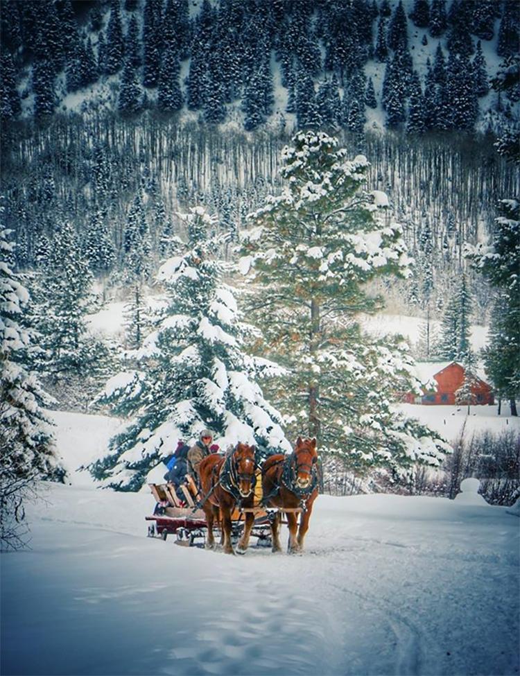 rapp sleighs