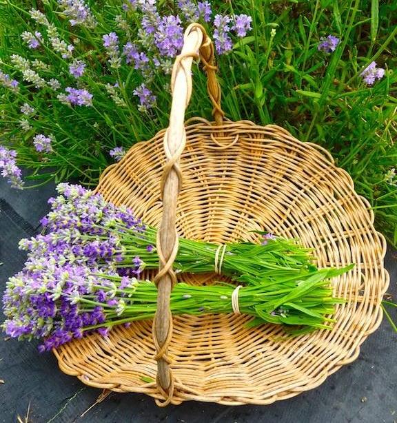 lavender, basket