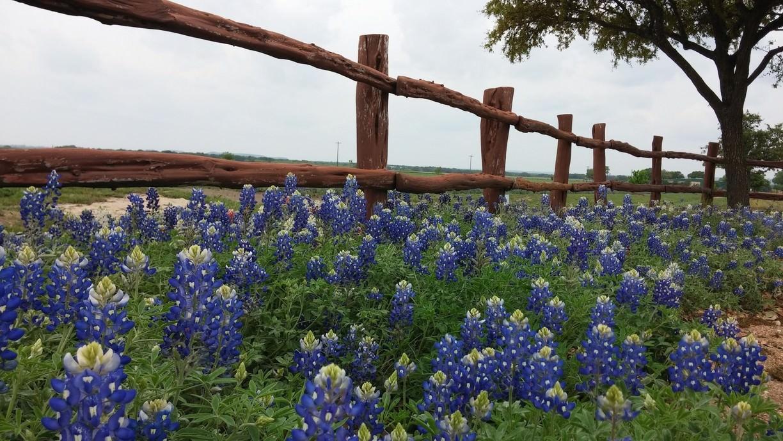 JOhnson City, TX
