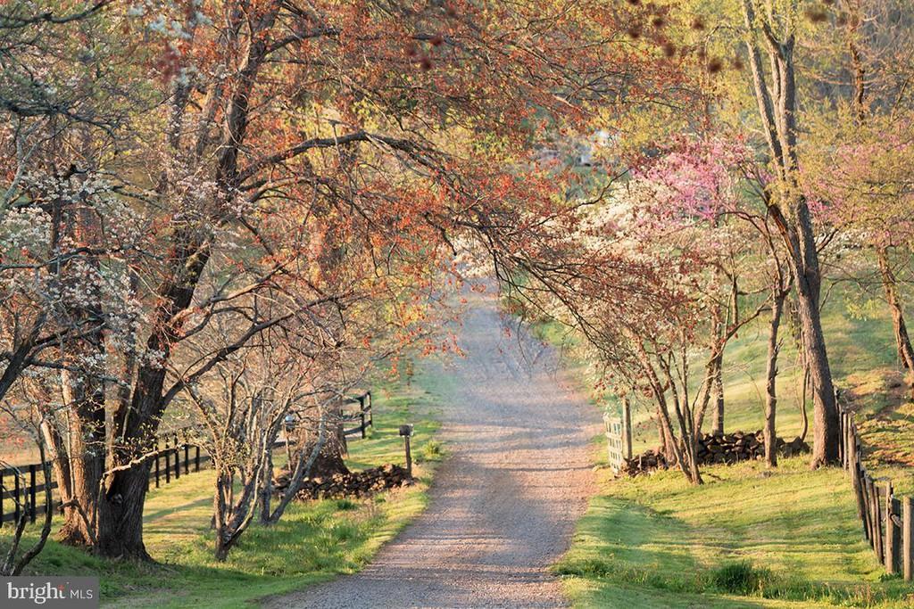 path, trees