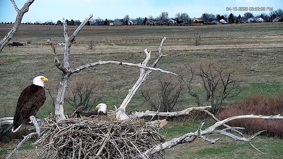 bald eagles nest