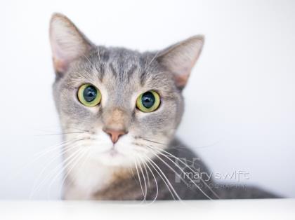 Katrina, Cat