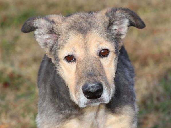 Jessie, Dog