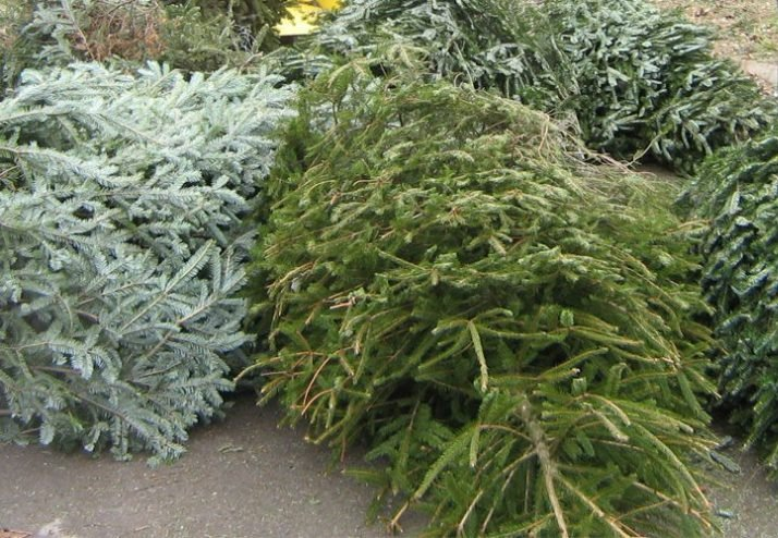 Where to Recycle your Christmas Tree Around Denver and ...