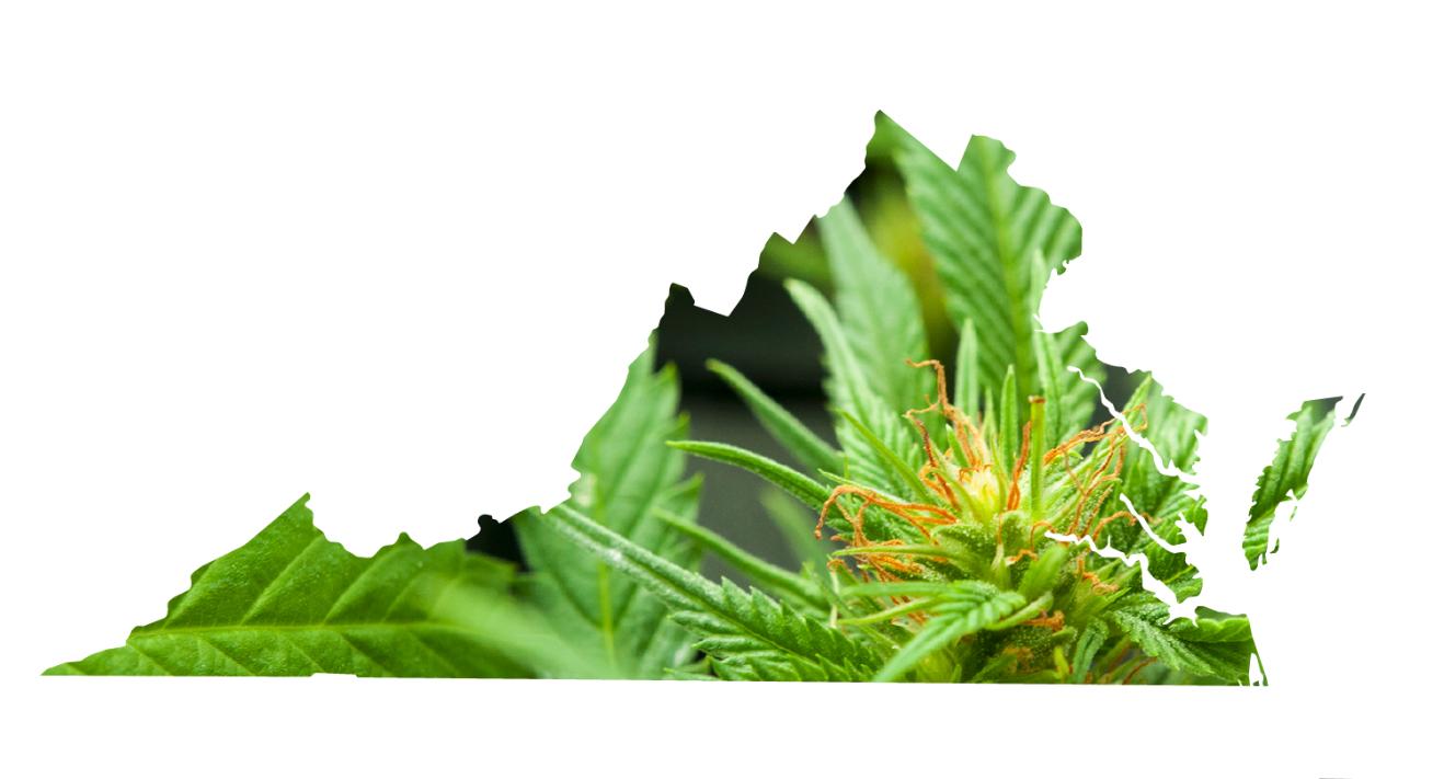 Marijuana decriminalized in Virginia illustration