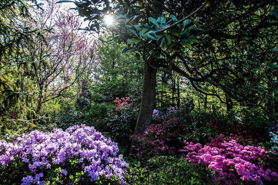 Hillwood Estate, garden