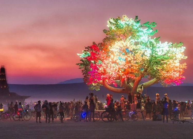 Tree at burning man