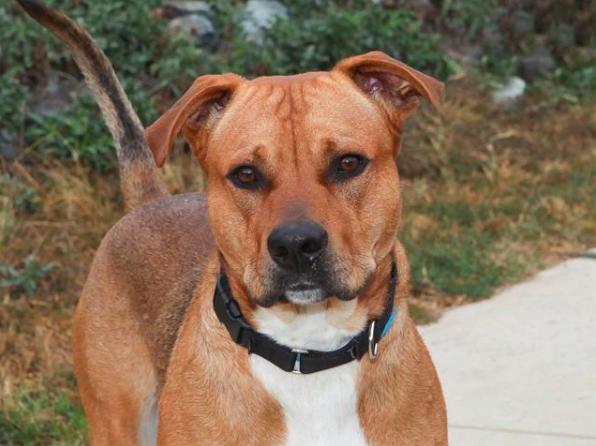 Rex, Dog