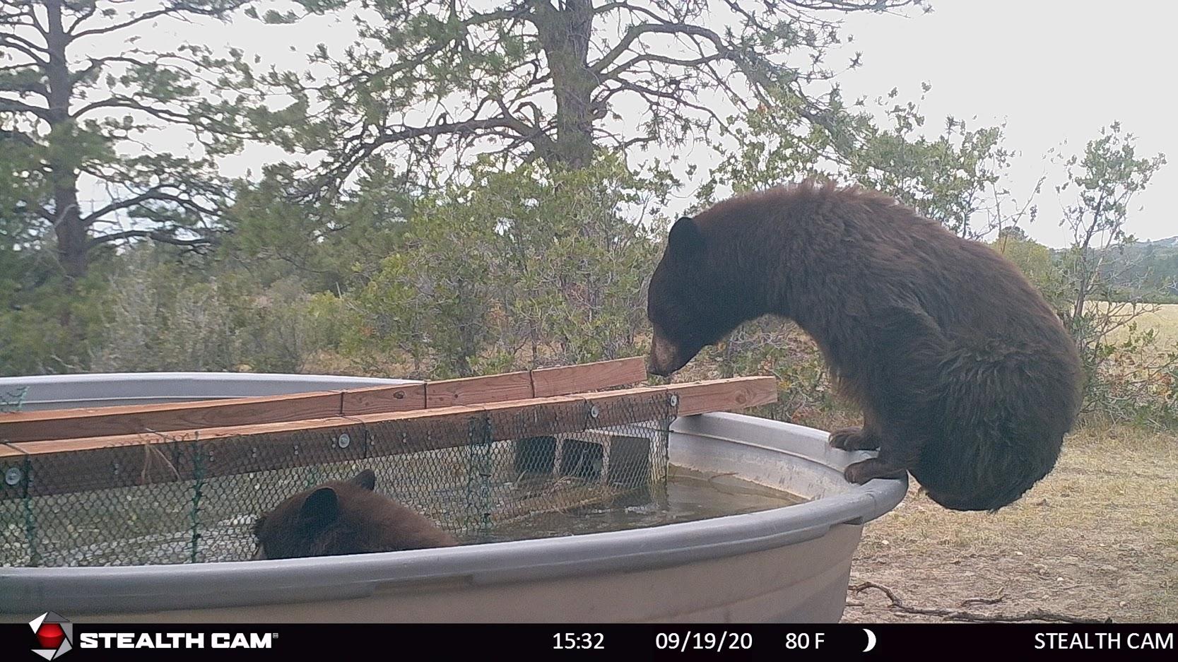 bear on water tank