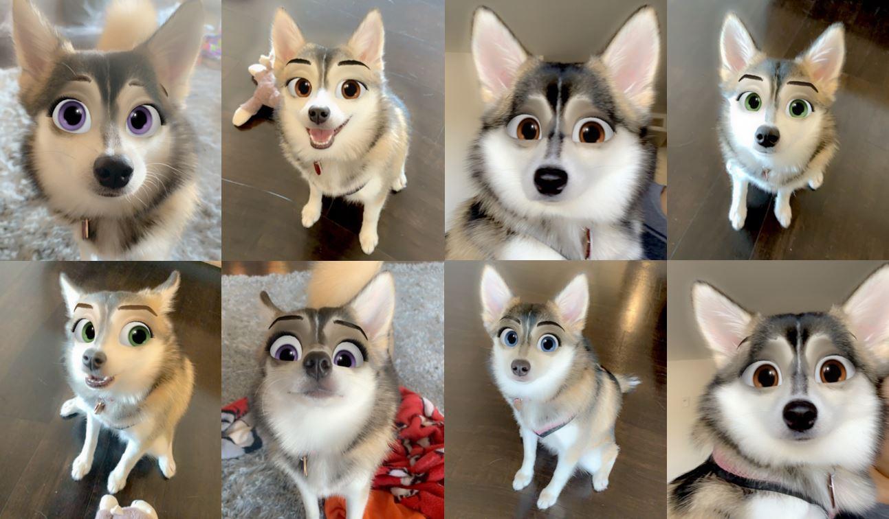 Dog with cartoon eyes