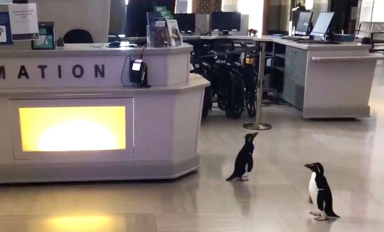 Penguins in an Aquarium