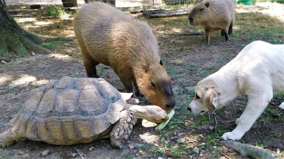 turtle and farm animals