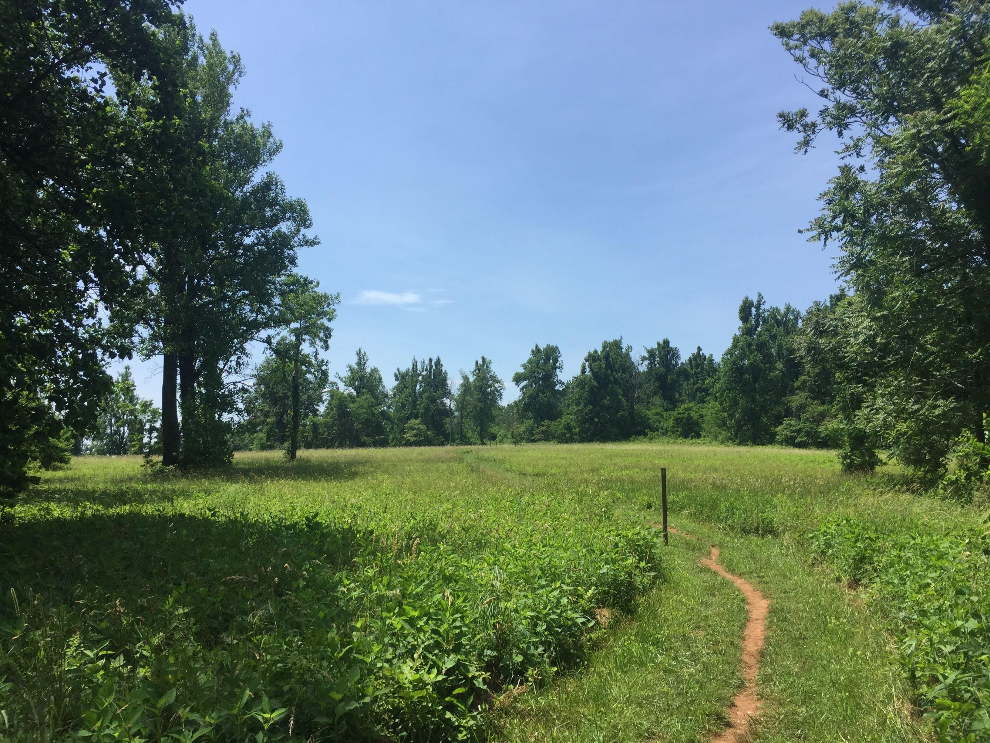Sky Meadows