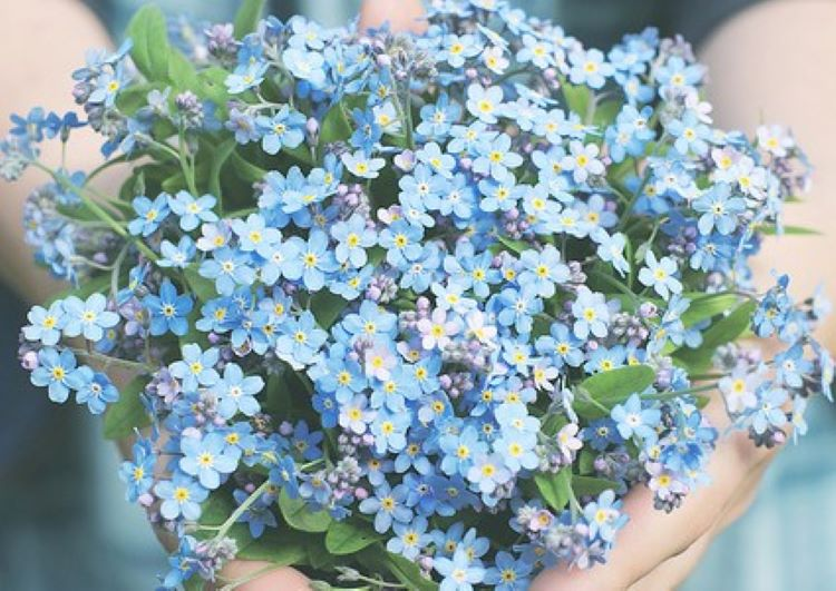 Forget-Me-Not Flowers Virginia Beach Mass Shooting One Year Anniversary Flower Rememberance 2020