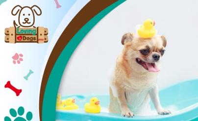 56% OFF: Baño para Perro
