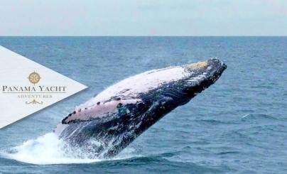 50% OFF: Avistamiento de Ballenas