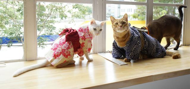 Cat Cafe Neko No Niwa