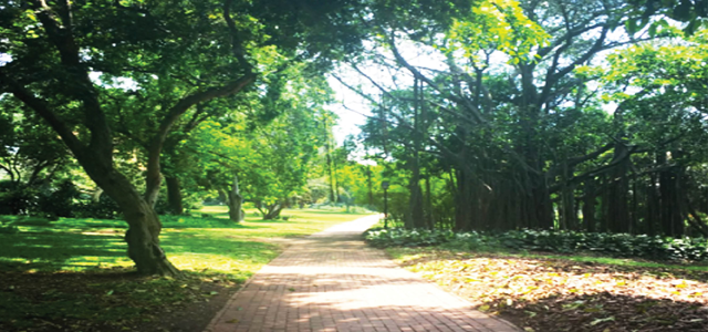 Vistors to the Durban Botanica; Gardens are taken on a tour by a professional guide. This allows visitors to see unseen parts of the gardens with a running commentary on the horticultural background and history. The tour is a fun and educational way to take in the 15 hectare spread that is The Durban Botanical Gardens.