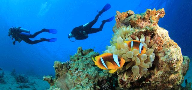 عُمان للإبحار شركة تكرّس الوقت لأخذك مع أفراد عائلتك على سطح البحر وفي البحر وتحت سطح البحر في سلطنة عُمان. استكشف مناظر طبيعية خلابة واكتشف جنة رائعة تحت الماء وجرّب نشاطات مشوّقة يستمتع بها الجميع. يُفضّل استكشاف خط عُمان الساحلي بحراً. ولذلك، تقدّم عُمان للإبحار دروساً في الإبحار والتزلج على المياه وتوفر الرحلات على متن مراكب مؤجرة وتقدّم دروساً في قيادة المراكب ودروساً في الغوص والرحلات البحرية. نحن المورّد الأول للرياضات المائية في عُمان، فدعنا نأخذك في رحلة استكشافية ممتعة.