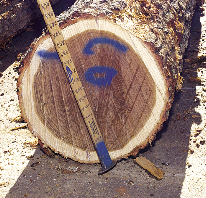 Log being inspected
