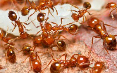 Inexpensive, Natural Ant Remedies