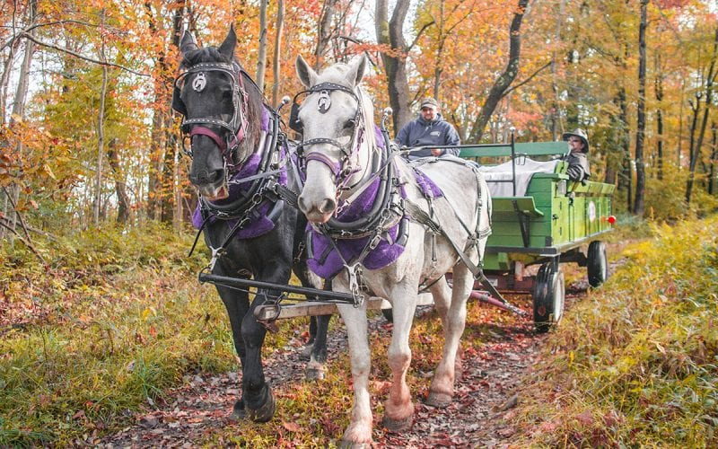 Seven Springs Stables Wagon Ride
