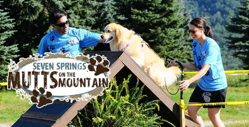 Mutts on the Mountain