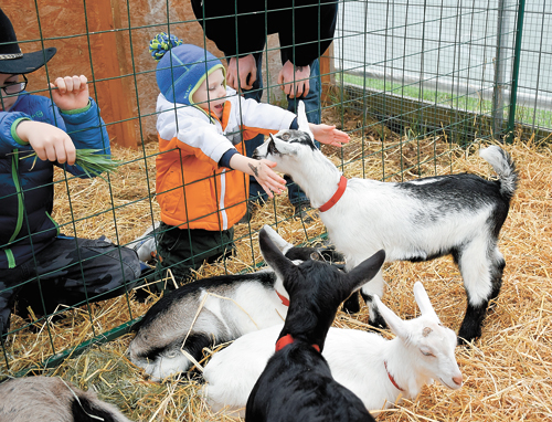 Sawyer Fenton of Elizabethtown reaches out to hug a goat during Kidding Day. Farm staff regularly released a few baby goats at a time into the crowd so that kids like Fenton could pet, play and interact with the newborns. (Enterprise photo — Justin A. Levine)