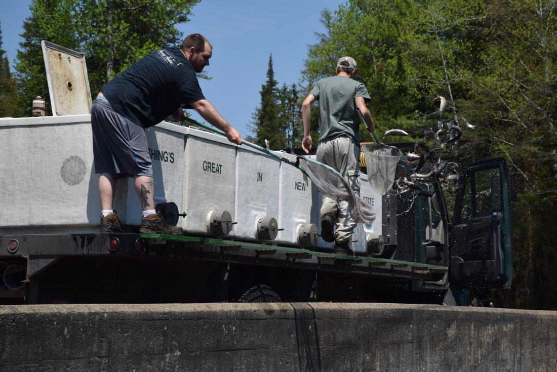 131dabdd837 Essex County leads DEC spring fish stocking list