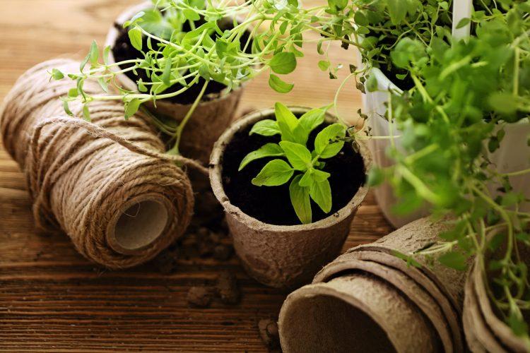starting-herbs