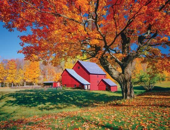 Common Trees For The Autumn Landscape Capper S Farmer
