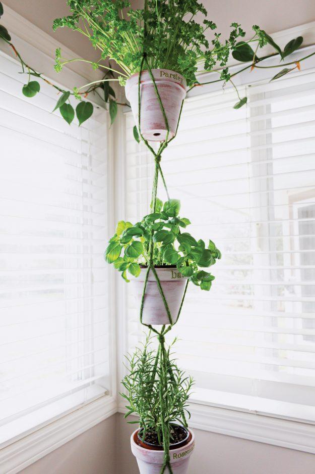 hanging-herb