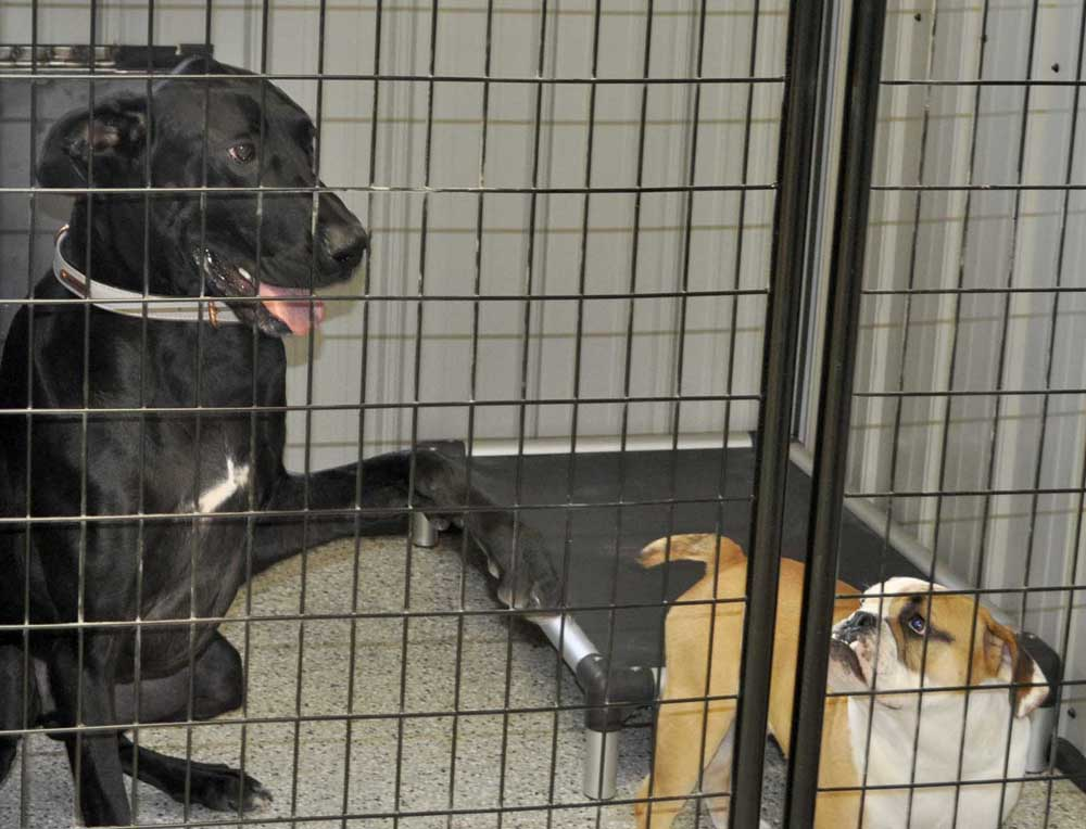 New Dog Boarding Facility Will Welcome Your Canine Kin