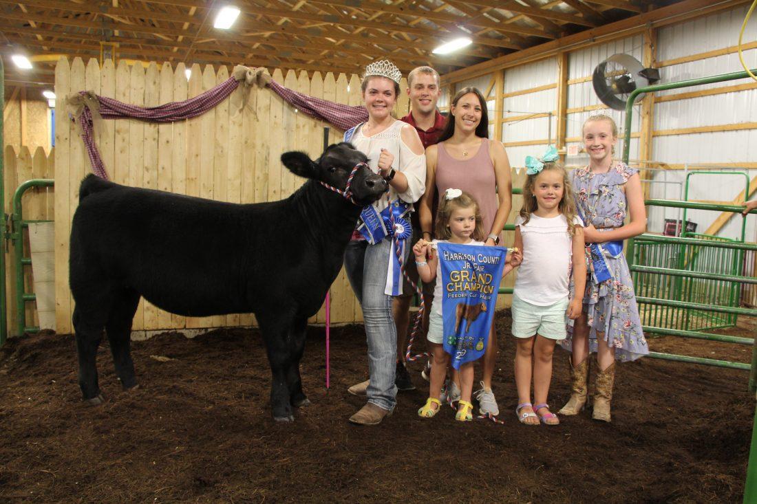 Grand champion feeder calf at Harrison County Fair | News, Sports