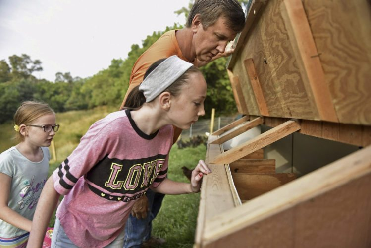 AP photo  Madison Mowery, 11, peeks into the side of a chicken coop with her father, Robert Mowery, as Hailey Mowery, 10, watches from behind at their Moon Township, Pa. farm. While no eggs were found that morning, the family is hoping the chickens eventually produce enough eggs to sell at local farmers markets. June coyote attacks that killed at least 50 chickens set back their original plan to begin selling eggs as early as June.