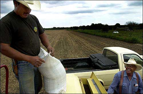 Farmers tout triticale's potential | News, Sports, Jobs - Lawrence