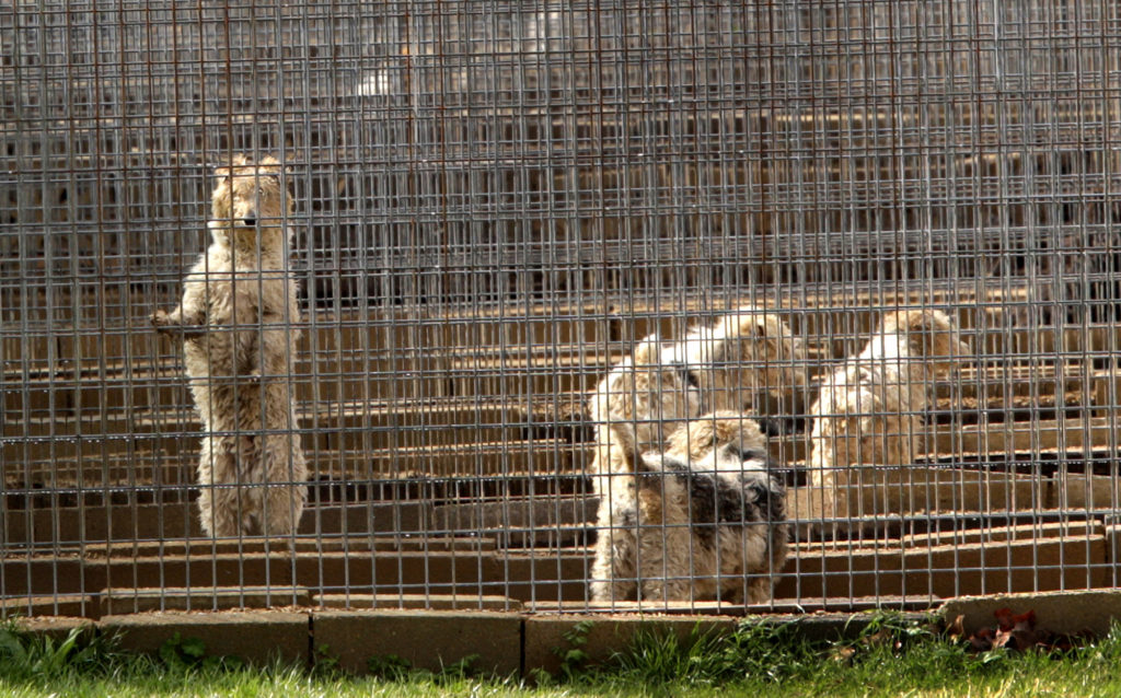 Missouri tries to shed reputation as 'puppy mill' capital of