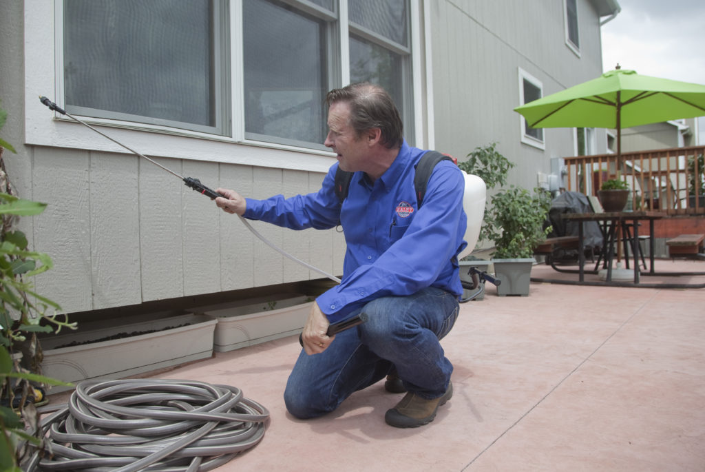 Armies Of Ants Go Marching Into Homes Across City News