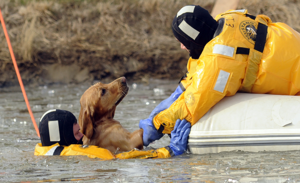One dog dies, another rescued from pond accident on East