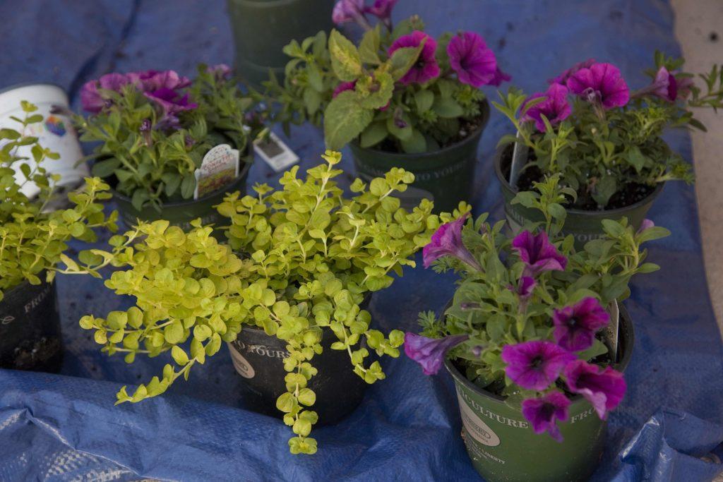 garden calendar: fall flowers brighten landscape | news, sports, jobs - lawrence journal-world