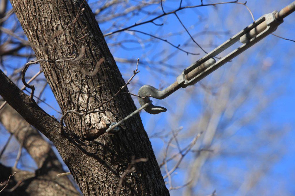 Garden Calendar Give Splitting Trees A Life Support