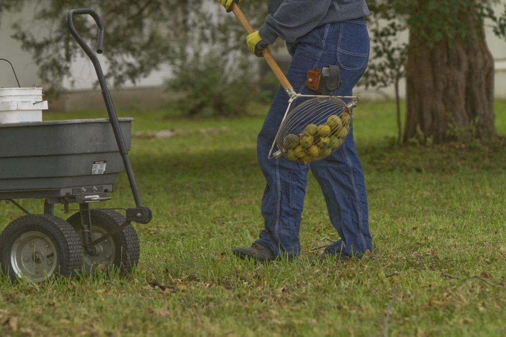 Lawrence woman tries to revive the family business: walnut farming