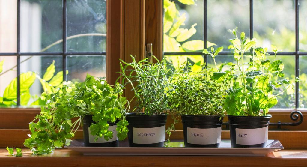 Garden Variety Make Your Own Windowsill Herb Garden News Sports