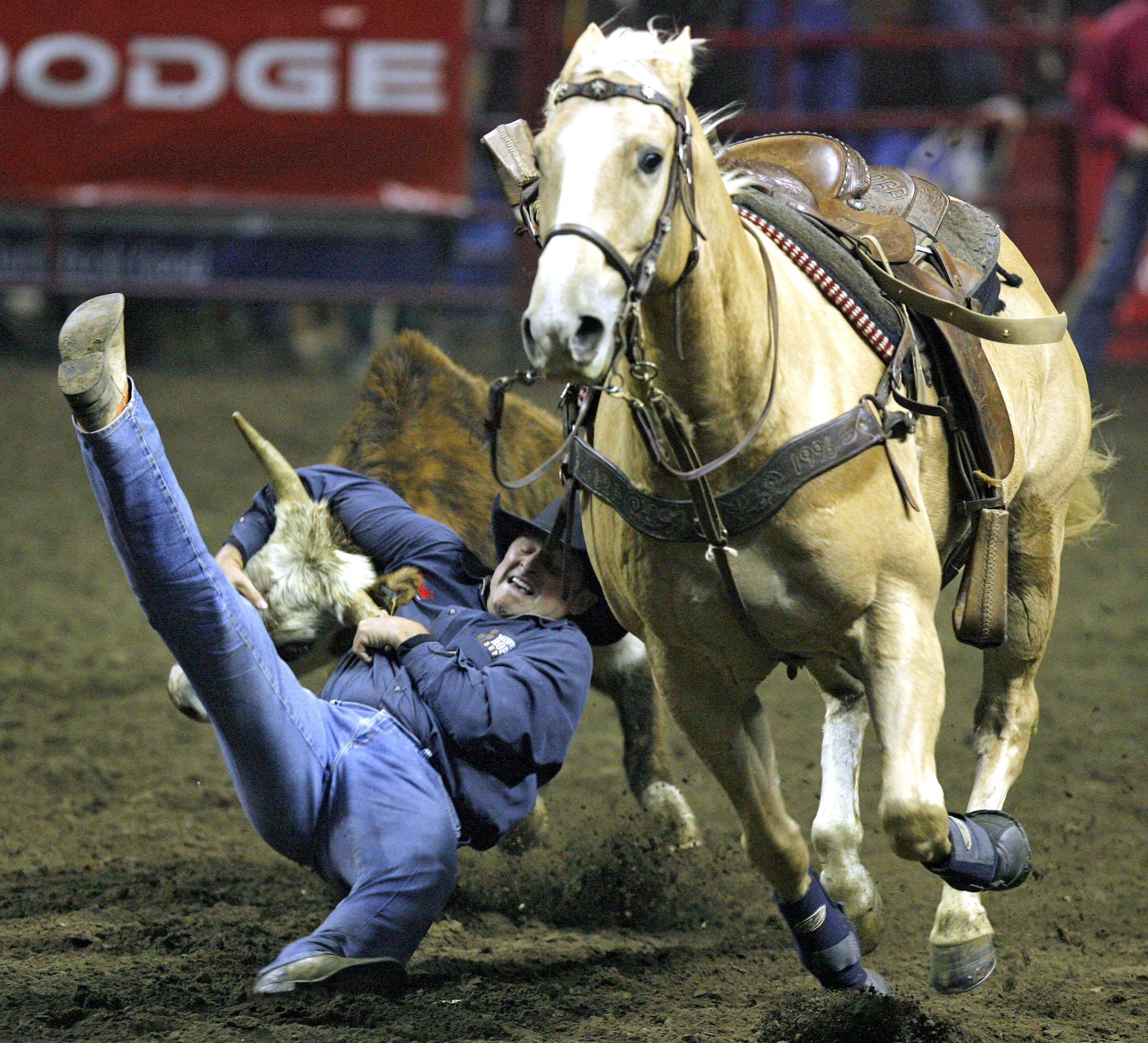 Missouri S American Royal Horse Exhibition Moving To