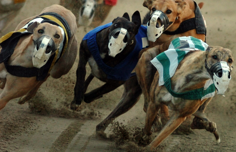 Lawrence Hall Abilene >> Lawrence animal rights advocates speak against greyhound racing bill | News, Sports, Jobs ...