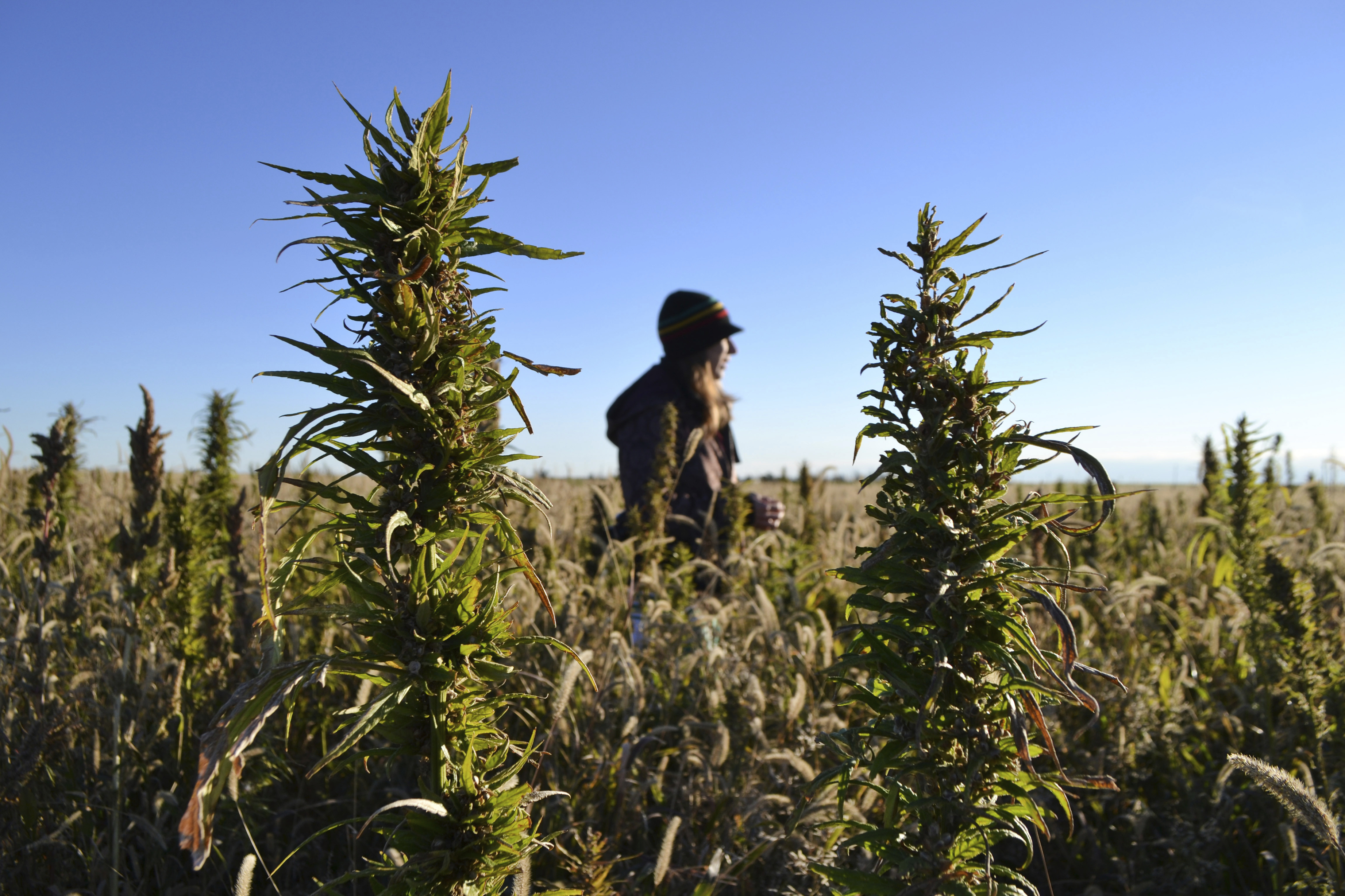 After its first hemp season, what did Kansas learn?